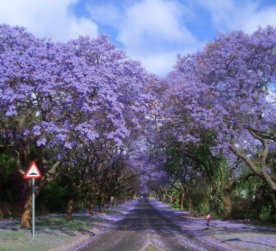 世界上10条最美树隧道 绿树成荫壮美无比