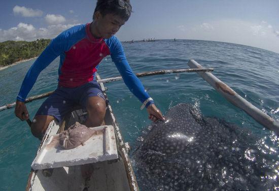 """在菲律宾与海洋""""温柔巨人""""鲸鲨同游共舞"""