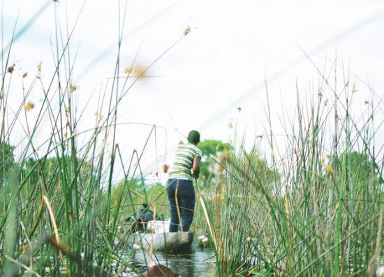 狂野非洲!沼泽丛中寻找河马