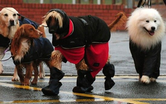2013英国赛狗会:汪星人的世界你不懂