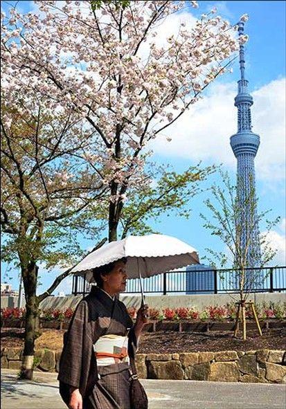 世界各地的樱花季