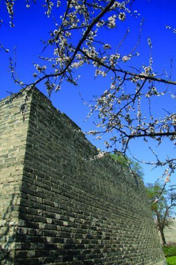 四月,一起来北京赏花吧