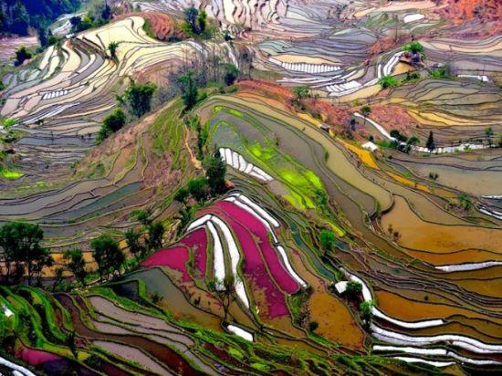 中国云南的壮观梯田