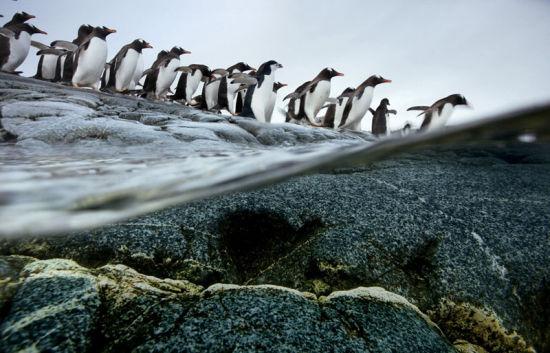 震撼人心的动物大迁徙
