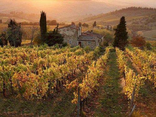美酒之旅 纵览世界葡萄酒庄园