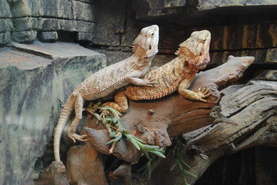 大连森林动物园六一新节目抢先看(2)
