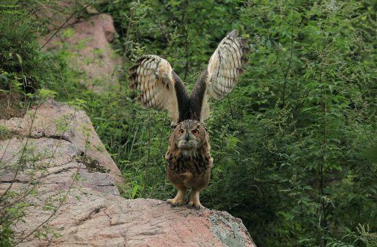 国家二级重点保护野生动物