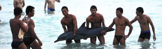 三亚游客将搁浅海豚抬出水面合影