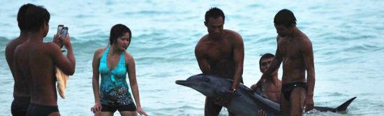 三亚游客将搁浅海豚抬出水面合影(组图)