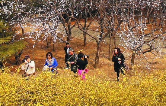 春暖花开,人们走出家门拿起相机在美丽春景里留下记忆。半岛晨报、海力网摄影记者朴峰