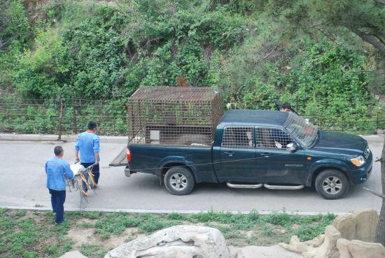 大连森林动物园每年都要进行多次安全培训
