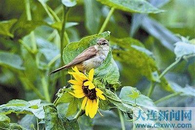 又一批新生幼鸟活跃在我市林间