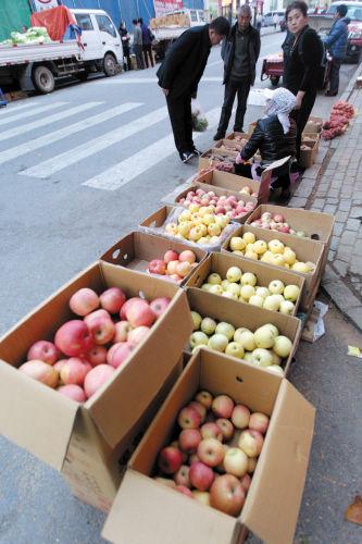 价格比去年涨了四成 苹果减产果农没减收